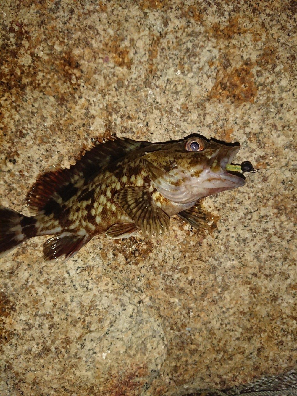 おぐさんの投稿画像,写っている魚はカサゴ
