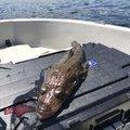 リズ(チームN)さんの静岡県熱海市での釣果写真