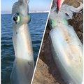 英信さんの鹿児島県霧島市での釣果写真