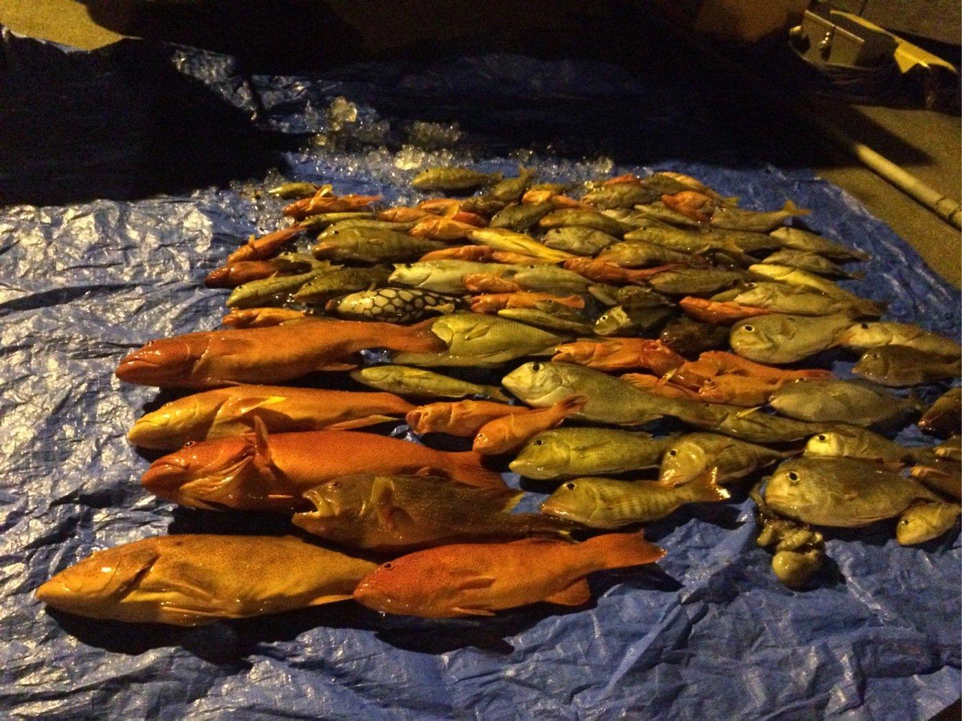 kwaifehさんの投稿画像,写っている魚は