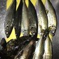アジング大好き男さんの大分県臼杵市での釣果写真