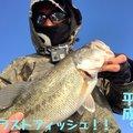 QBさんの滋賀県守山市でのブラックバスの釣果写真