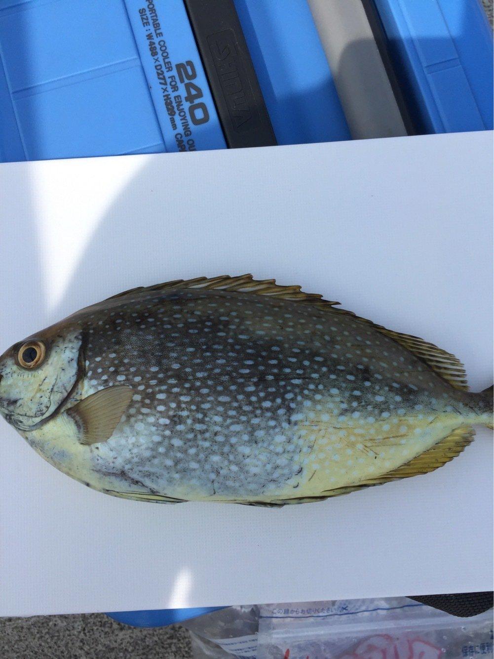 村上友洋さんの投稿画像,写っている魚は