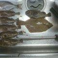 富山の釣り人さんのカレイの釣果写真