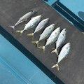 まつもとさんの和歌山県有田市での釣果写真
