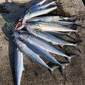 イーグルさんの石川県金沢市での釣果写真