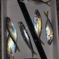釣り課長さんの徳島県鳴門市での釣果写真