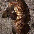 snufkin49さんの青森県青森市での釣果写真