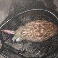 仁 介護士時々釣り師さんの岡山県瀬戸内市での釣果写真