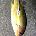 Jさんの沖縄県豊見城市での釣果写真