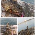 ヨッシーさんの愛知県碧南市での釣果写真