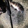 takiさんの静岡県湖西市での釣果写真