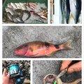 Noelさんの沖縄県名護市での釣果写真
