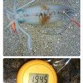 カイリオアさんの静岡県下田市での釣果写真