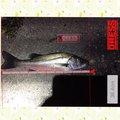 ノリさんさんの三重県桑名市での釣果写真