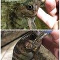ヨッシーさんの愛知県知多郡での釣果写真