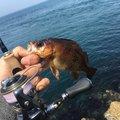 サカやんさんの愛媛県伊予市での釣果写真
