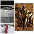 T.Genkiさんの大分県津久見市でのアジの釣果写真
