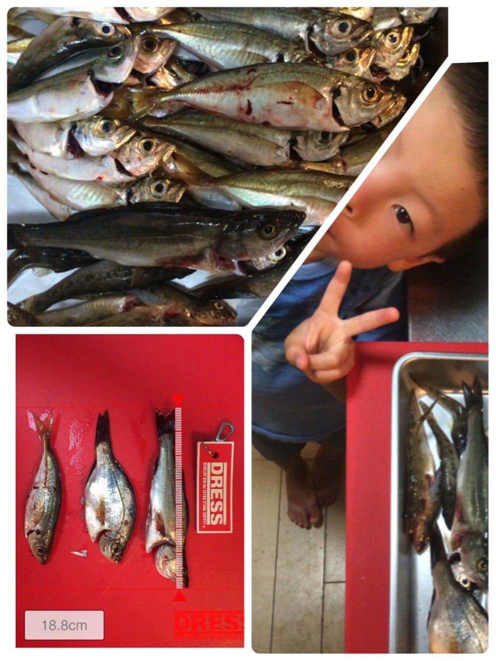 ヤスさんの投稿画像,写っている魚はアジ