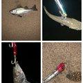 akakage さんの三重県桑名市での釣果写真