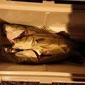 までいさんの岡山県瀬戸内市での釣果写真