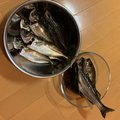 フィッシャーさんの神奈川県でのメバルの釣果写真