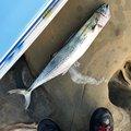 池田さんの宮崎県日南市での釣果写真