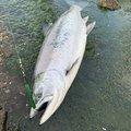 たっかくんさんの北海道松前郡での釣果写真
