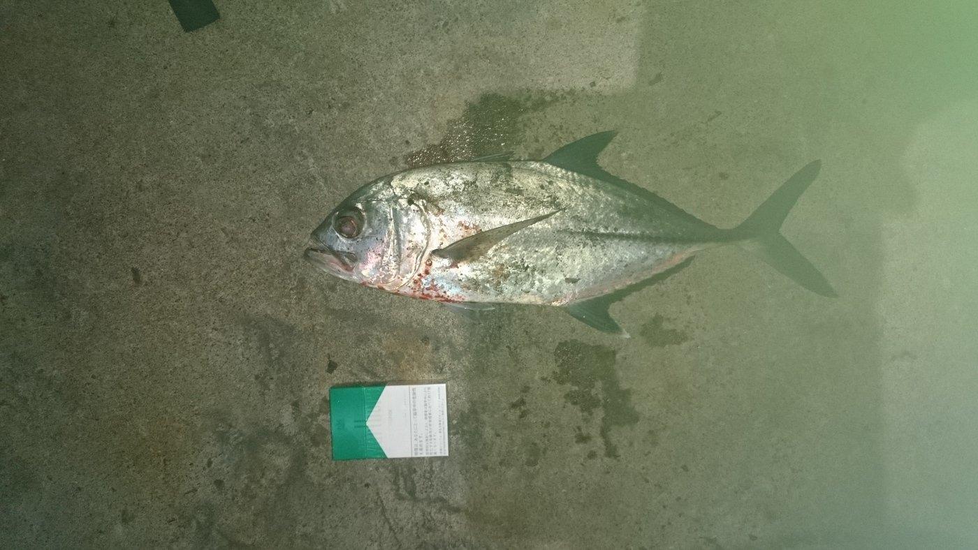 でーすけさんの投稿画像,写っている魚は