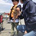 魚ーさんの静岡県静岡市でのカサゴの釣果写真