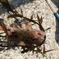 脱力感さんの長崎県長崎市での釣果写真