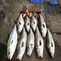 ともたろうさんの石川県珠洲市での釣果写真