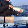 タマさんの千葉県いすみ市での釣果写真