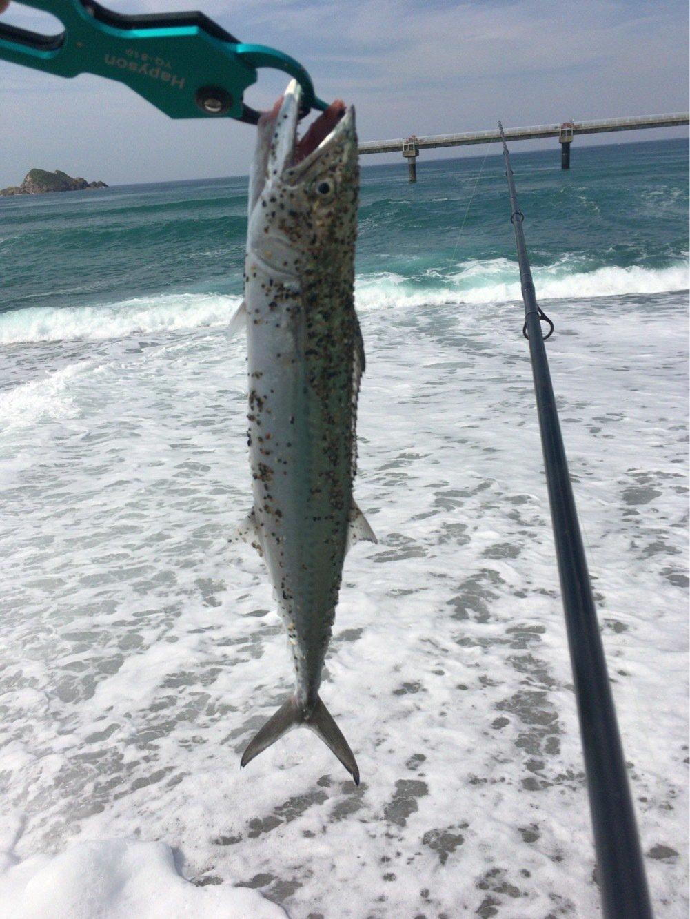 釣りでもしようさんの投稿画像,写っている魚はサワラ