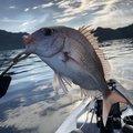 さとしさんの鹿児島県南さつま市での釣果写真