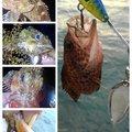 KRO さんの静岡県伊豆の国市でのカサゴの釣果写真