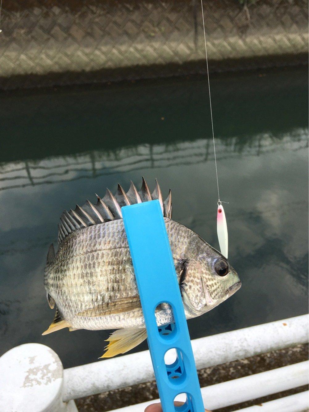 川島モーツァルトさんの投稿画像,写っている魚は