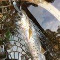 あぽさんの宮崎県小林市での釣果写真