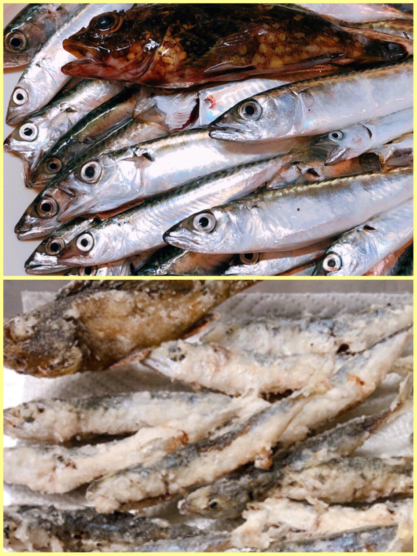 Genさんの投稿画像,写っている魚はマサバ,アジ,カサゴ