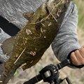 mofu.Dr_F.Aさんの茨城県笠間市での釣果写真