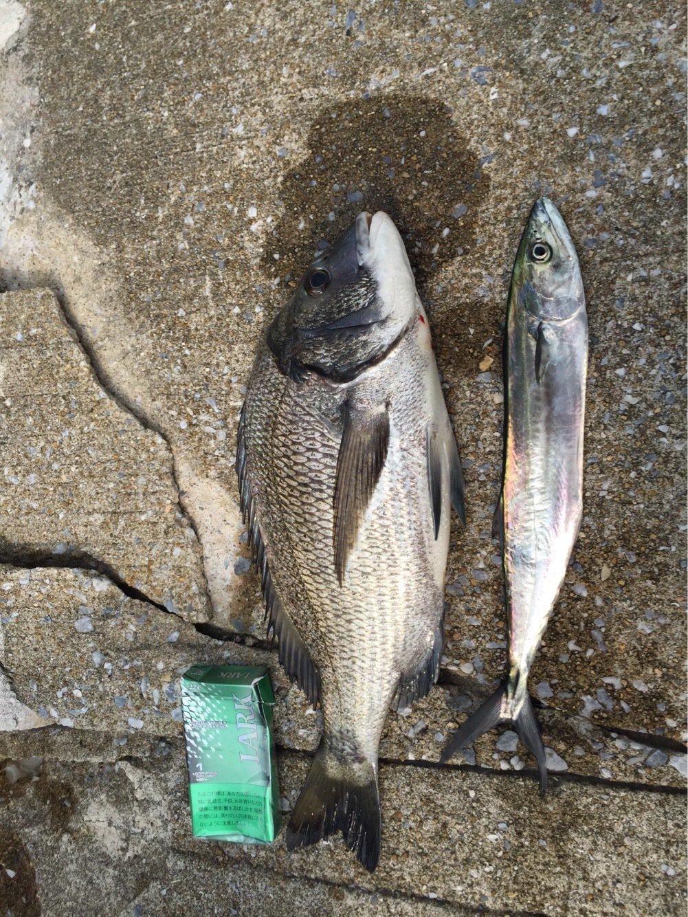 桃太郎さんの投稿画像,写っている魚は
