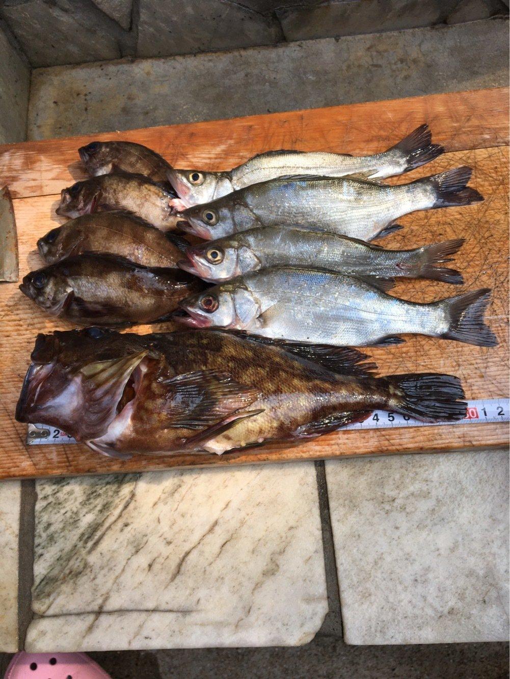 Yuuuuuuukiさんの投稿画像,写っている魚はカサゴ