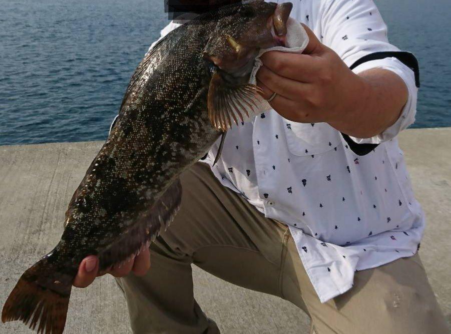 しゅんぺきさんの投稿画像,写っている魚はアイナメ