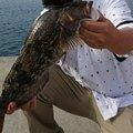 しゅんぺきさんの岩手県大船渡市での釣果写真