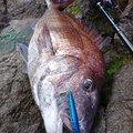 金太郎さんの青森県西津軽郡での釣果写真