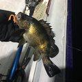 Satossyさんの大分県津久見市での釣果写真