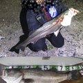 ドラMAXさんの青森県弘前市での釣果写真