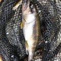 カツミさんの奈良県宇陀郡での釣果写真