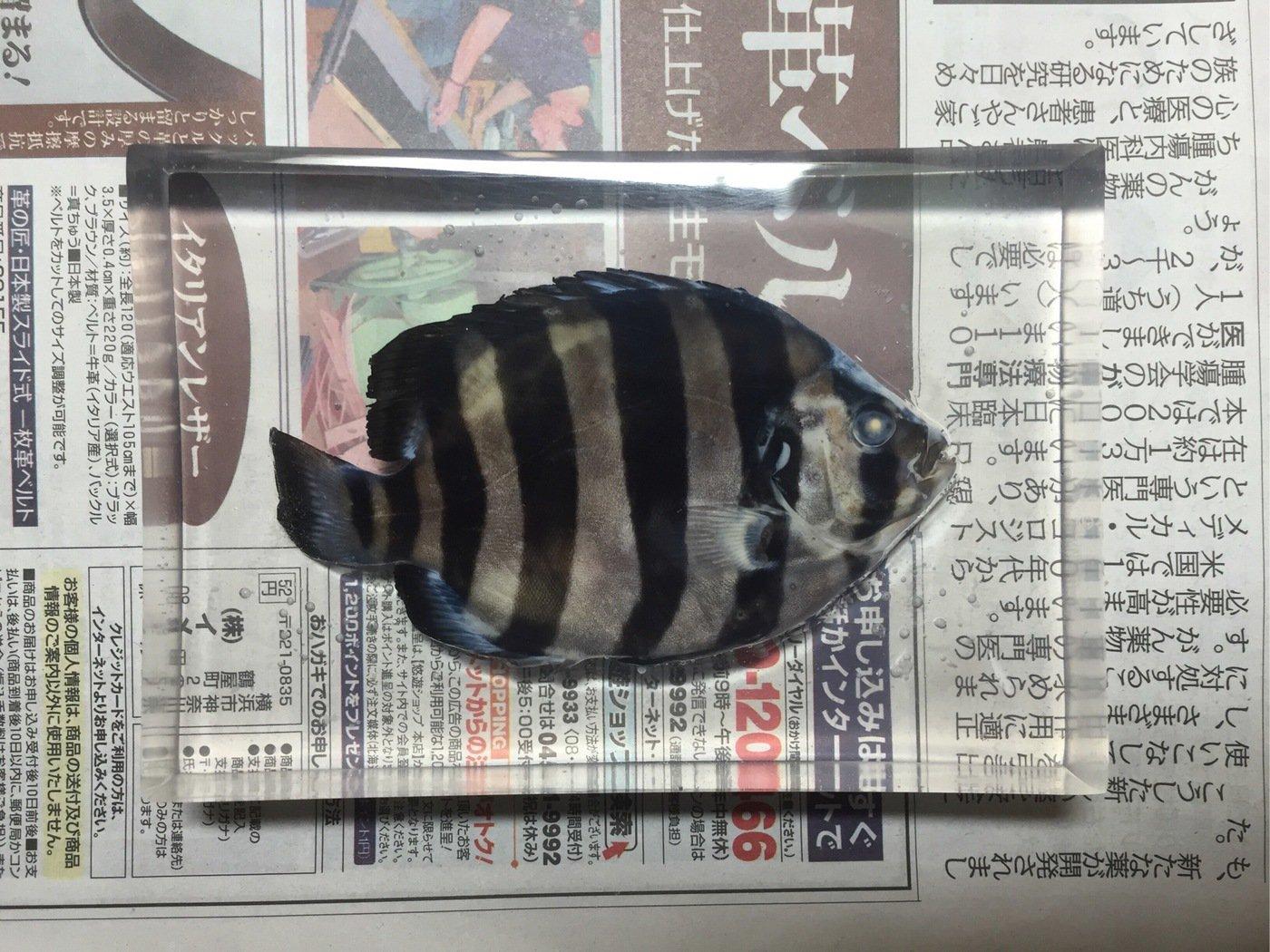 あいずさんの投稿画像,写っている魚は