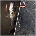 み様さんの千葉県富津市でのヒラメの釣果写真